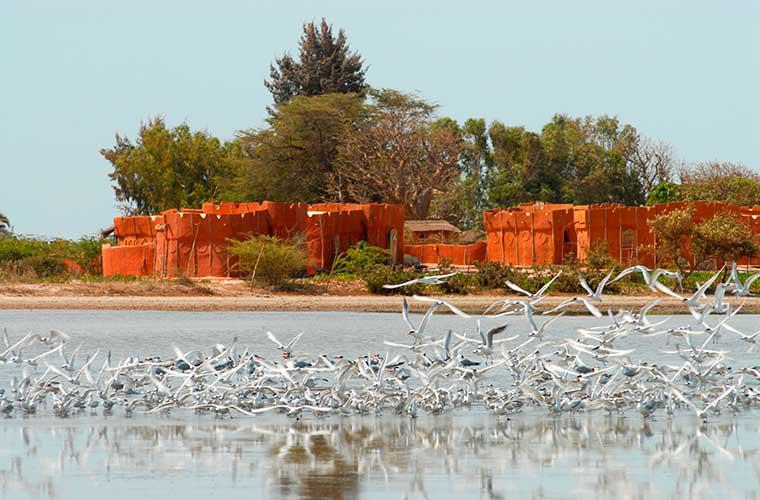 Photo de l'Ecolodge de Palmarin