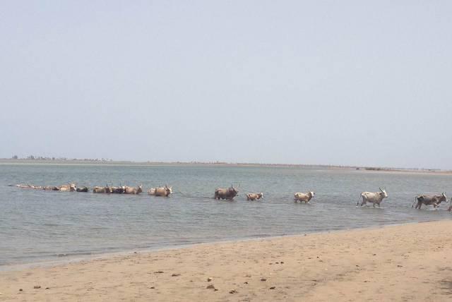Photo 9 du Les activités et excursions de l'Ecolodge de Simal