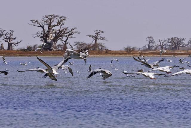 Photo 5 du Activités dans un lodge situé dans la plus belle région du Sénégal.