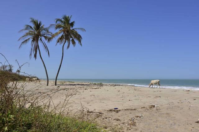 Photo 2 du Bienvenue à l'Ecolodge de Palmarin, séjour au bout du monde dans un site epoustoufflant