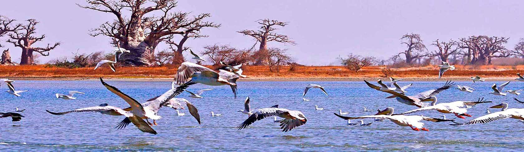 Panoramique des Ecolodges du Sénégal